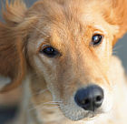 Briar Hill Health Campus Hosting Pet Adoption Event TODAY–4 to 7pm