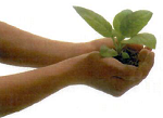 Spring Plant Exchanges in B. G. and Toledo