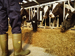 Low Milk Prices Sending Some Dairy Farmers Out of Business