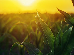 Farm Science Review 2019: Delayed harvest bolsters attendance