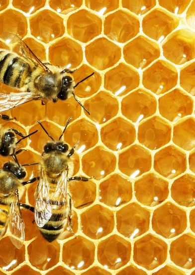 WCPD – Intro to Beekeeping