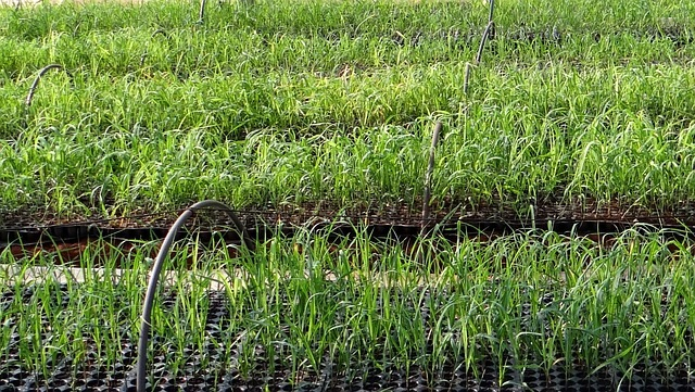 Federal change to assist farmers who plant cover crops