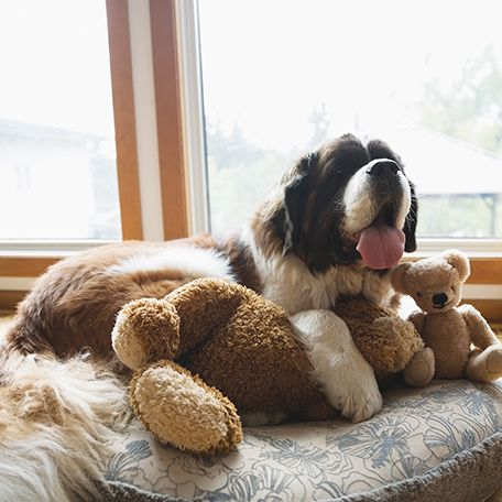 6 Ways to Help Your Dog Maintain Calm Behavior