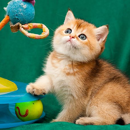 5 Tips for Capturing Purr-fect Pictures of Your Cat