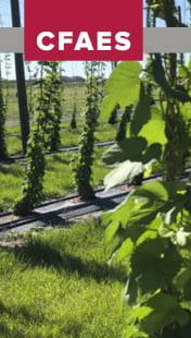 Learn about growing hops