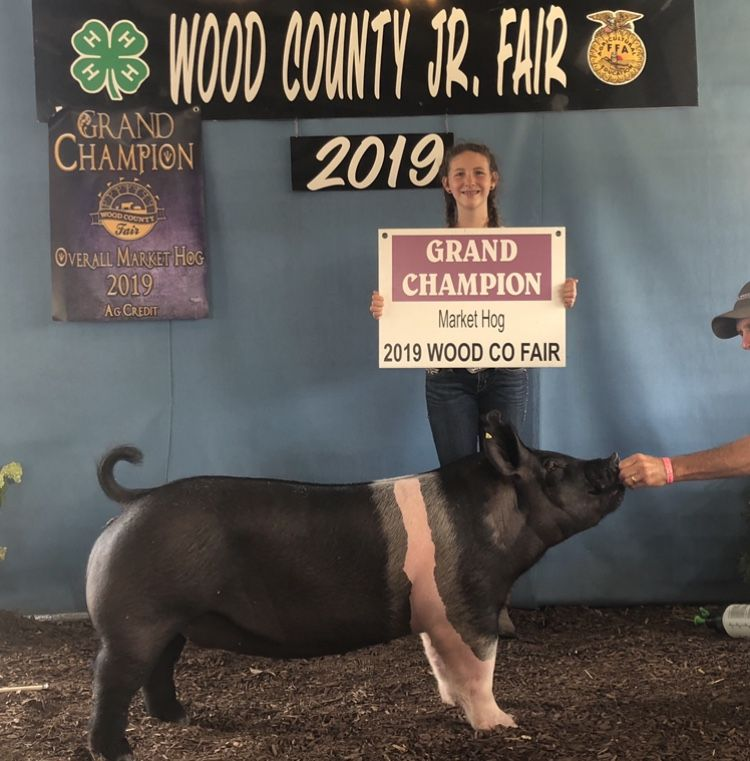 "Market Hog ""Queenie"" –  Queen of the Wood County Fair"