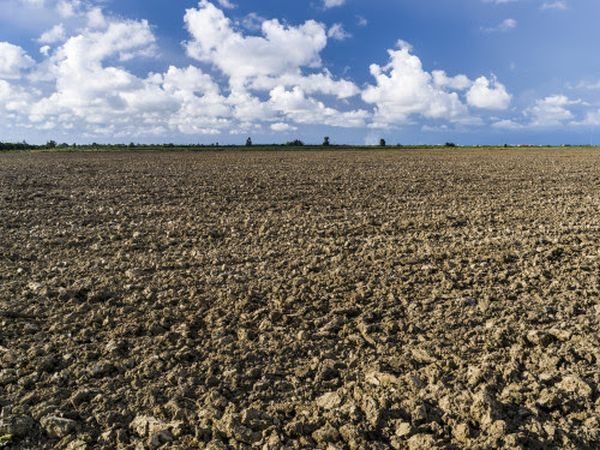 Soil health at risk on fallow fields
