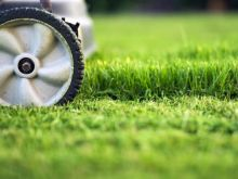 Getting Your Lawn in Shape