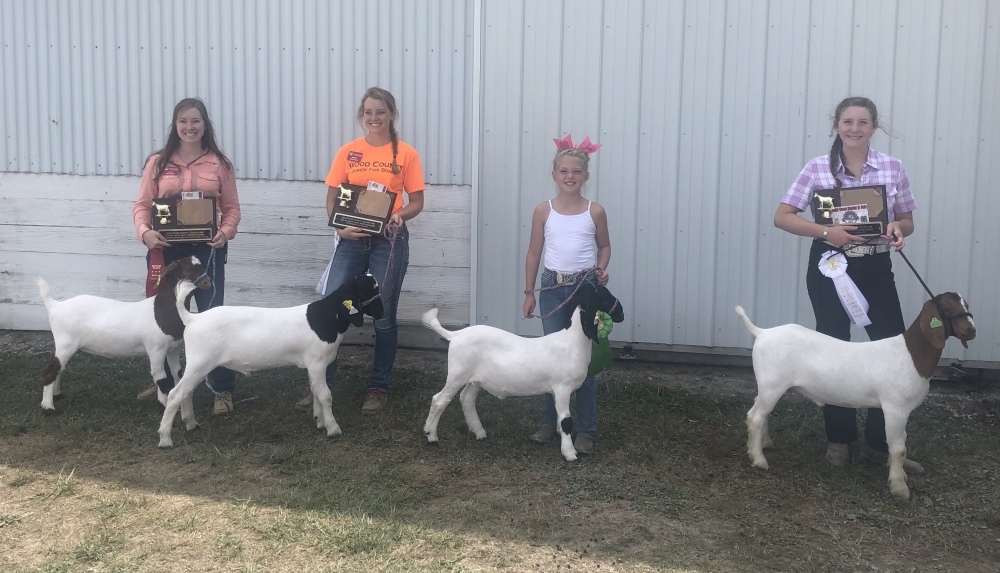 NB 4-Hers Shine at Wood Co. Fair
