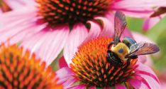 Wildlife Gardening: Create A Refuge For Birds, Bees, And Other Creatures