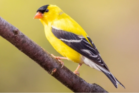 7 Easy Ways To Protect Songbirds In Your Yard
